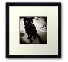 { Mr Black } Framed Print
