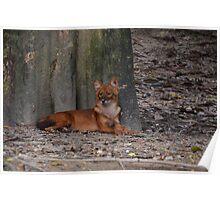 Wild dog Poster