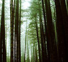 Sugar Pine Walk by ©Josephine Caruana