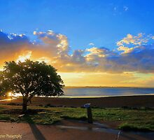Lonely Little Tree! by Tiffany Warner Photography