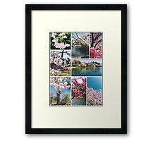 Beautiful Sakura Cherry Blossoms Park Pond Garden Spring Framed Print