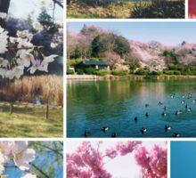 Beautiful Sakura Cherry Blossoms Park Pond Garden Spring Sticker