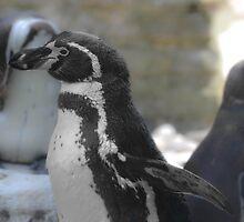 Lone Penguin by Beechmead
