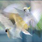 sulphur-crested cockatoos in flight by carol brandt