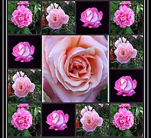 Pink Roses Collage by BlueMoonRose