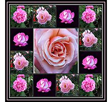 Pink Roses Collage Photographic Print