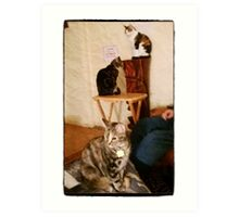The Three Amigos, - (t to b) Moire, Mickey, Co Co Kitty (from Kitty City) Art Print