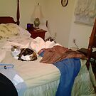 "Co Co Kitty : ""Make the Bed ? Do I look Like the Damn Maid ? How 'bout I Vaporize Your Sorry Ass Instead Holmes ? Move It before I Change My Mind ! "" by Edmond J. [""Skip""] O'Neill"
