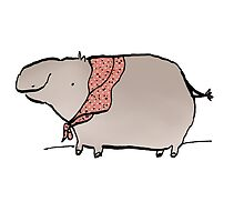 Hippo Wearing A Shawl by Sophie Corrigan