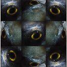 bird's-eye view by Jill Auville