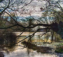St Catherine's Pond by Mark Bowden
