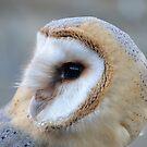 Baby Barn Owl by Dorothy Thomson