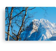 Birch trees and mountain Metal Print