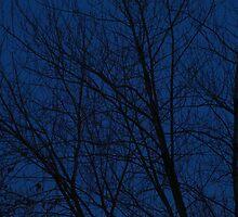 Evening Trees by chillauren