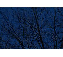 Evening Trees Photographic Print