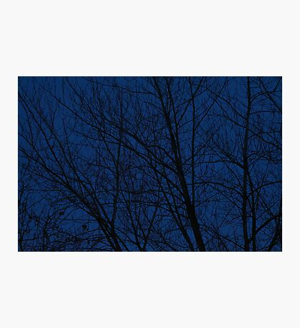 Evening Trees Photographic Print