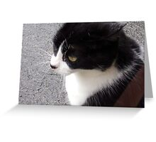 Beautiful stray Greeting Card