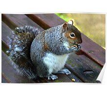 Sociable Squirrel at Weymouth Dorset UK Poster