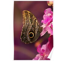 Blue Morpho butterly on pink flowers Poster