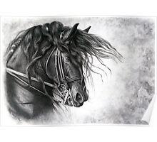 Django of Cacharel - Friesian Grand Prix Dressage Horse Poster