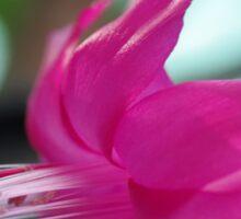 Pink Cactus flower Sticker