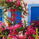 Bougainvilleas and Blue by Barbara  Brown