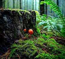 Small But Tough ~ Wild Mushrooms ~ by Charles & Patricia   Harkins ~ Picture Oregon