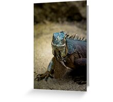 Handsome Iguana Greeting Card