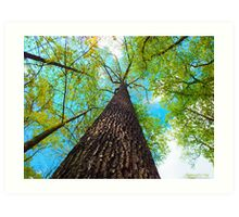 Climb the Highest Tree Art Print
