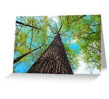 Climb the Highest Tree Greeting Card