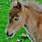 Miniature Foal by Martha Sherman