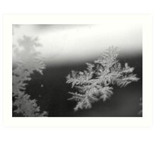 Feathered Shards of Frozen Water Art Print