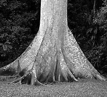 Kapok tree, Guatemala by Mark Bankins