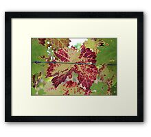 Colorful grape leaf Framed Print