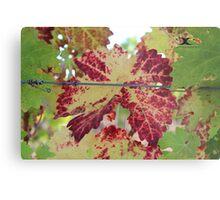 Colorful grape leaf Metal Print