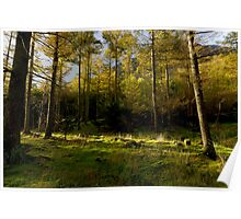 Buttermere Woods Poster