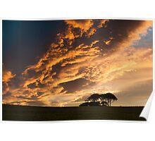 Copse Sunset - County Durham, UK Poster
