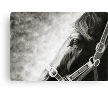 Black Caviar: Intensity - Racehorse Portrait Canvas Print