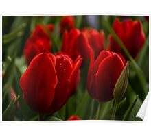 Vivid Red Tulip Garden Poster