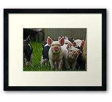 Happy Piggy's Framed Print