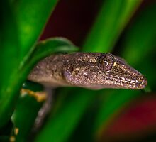 Gecko in Bamboo by Monosquid