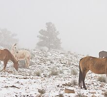 Horses in the Winter Snow and Fog by Bo Insogna