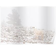 Horse with Winter Season Snow and Fog Poster