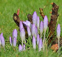 Brief Sign of Spring by relayer51