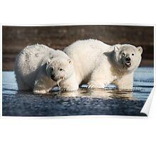 Curious Cubs Poster