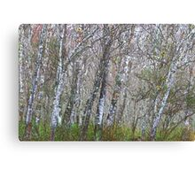Messy Woods Canvas Print