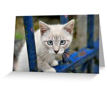 Kitten with blue eyes on the street Greeting Card