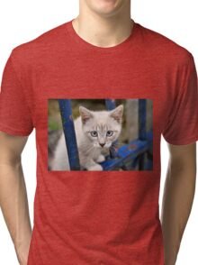Kitten with blue eyes on the street Tri-blend T-Shirt