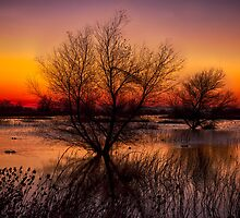 Wetlands Dawn by Kathleen Bishop