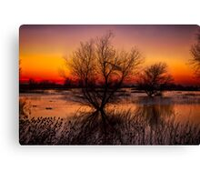 Wetlands Dawn Canvas Print